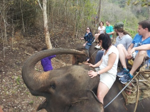 I learned to drive an elephant in Thailand.