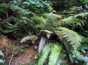 Just the plants you see in every open space in the Pacific Northwest. No big deal.