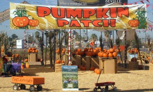 Pumpkin Patch in Higley