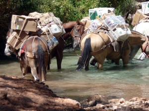 The horses loaded down and crossing the stream