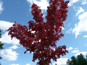 Bright red tree