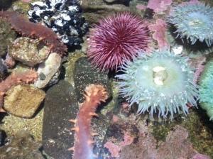 aquarium 088