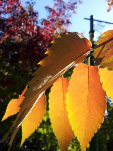 awesome_shadow_on_leaves