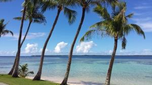 coconut trees at gab gab beach on a sunny day