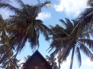 coconut trees used to seem exotic