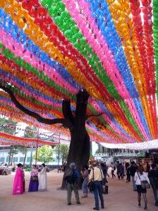 jogyesa_the_tree