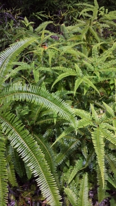 love these crispy ferns