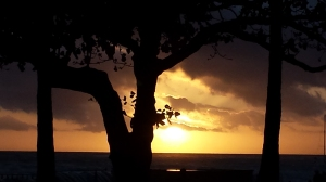 sunset at waikiki beach with a tree in the way