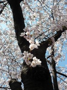 super_blossom_pic