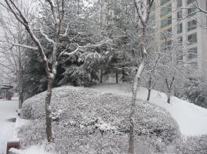 winter_2 016