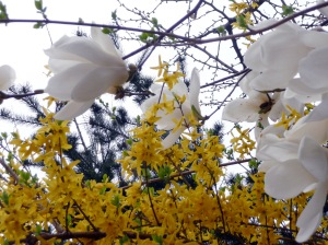 yellow_and_white