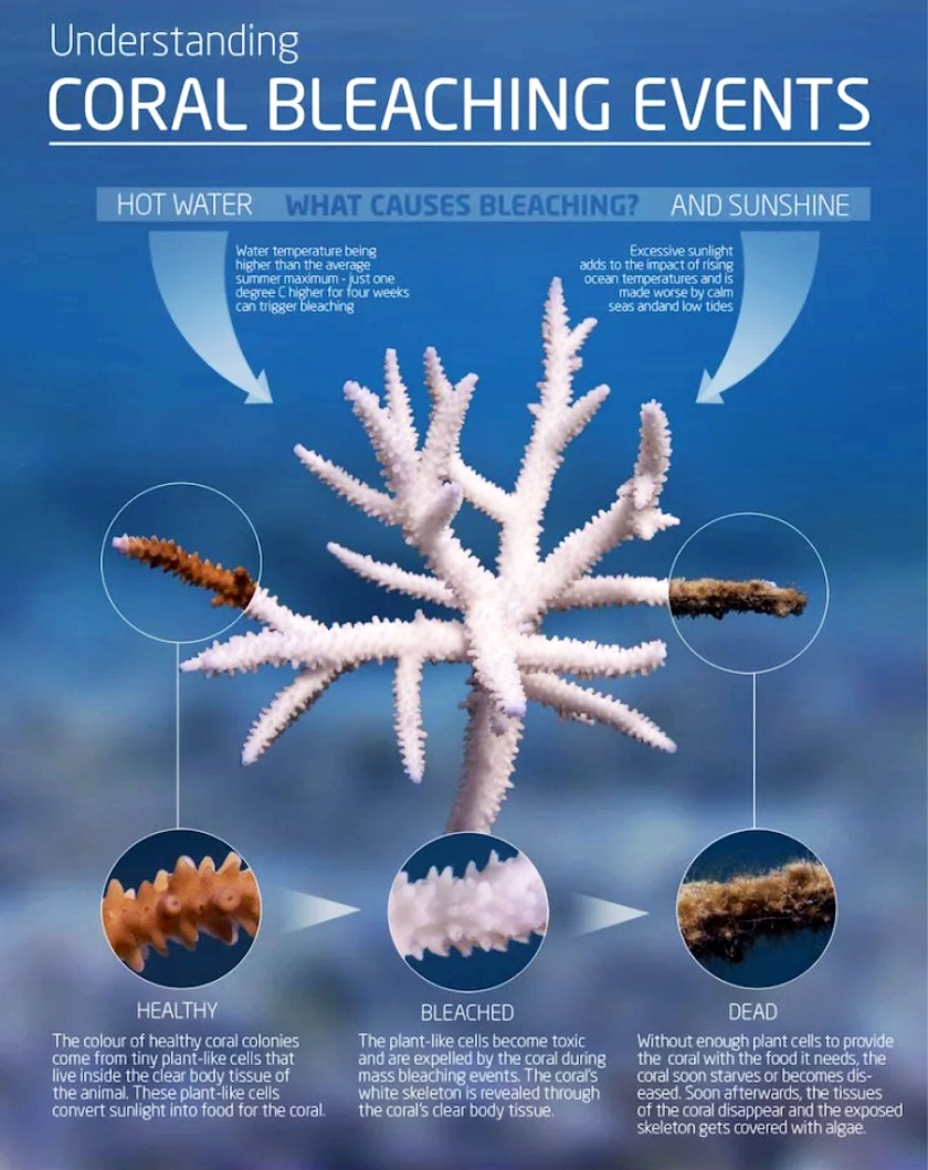 coral bleaching chart.jpg
