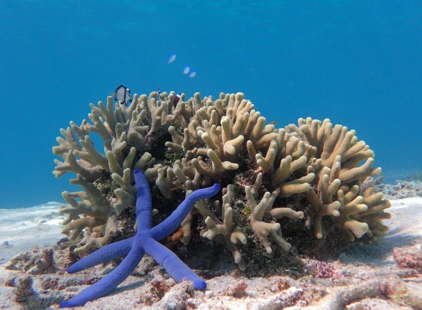 little coral.jpg