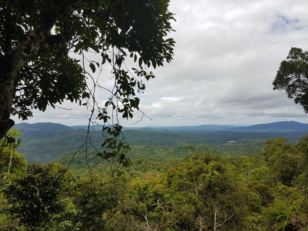rainforest overview