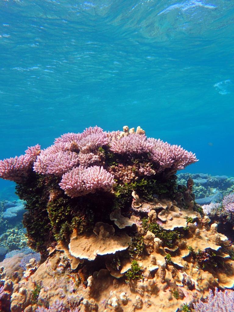 Just reef