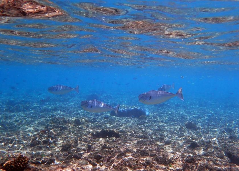 Fish Schooling