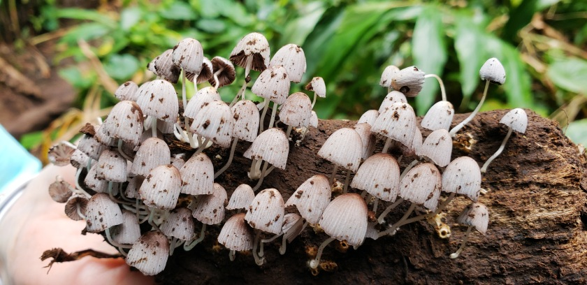tiny mushrooms.jpg