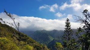 view from aiea trail.jpg